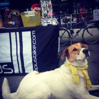 denman bike shop cute dog